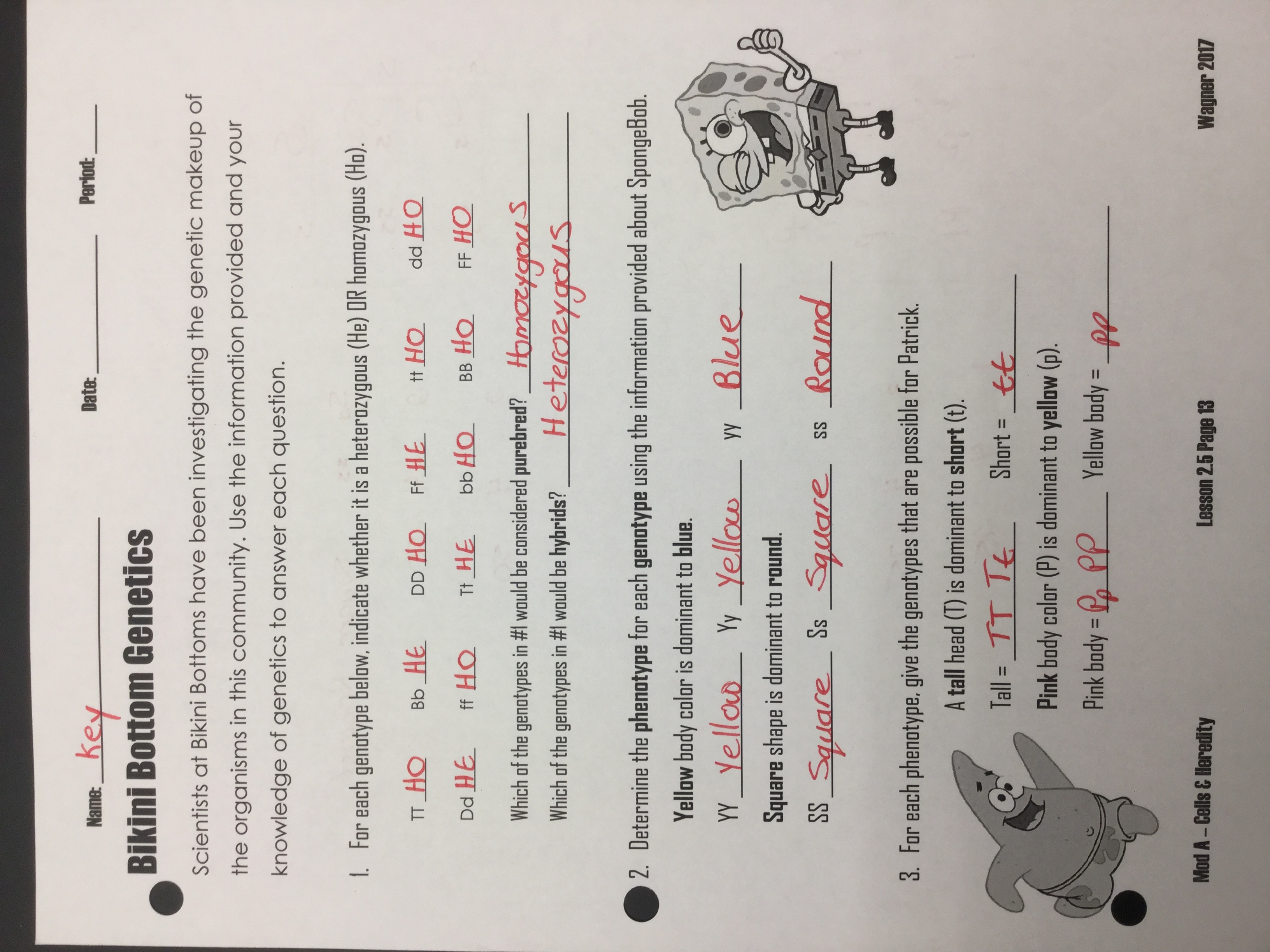 besides Bottom Ge ics 2 Worksheet for 6th   8th Grade   Lesson Pla additionally bottom ge ics answers   Template as well Bottom Ge ics Worksheet for 7th   12th Grade   Lesson Pla further Name Bottom Ge ics Worksheet  3 Dihybrid Crosses Use in addition pun t square worksheet 650 841   Pun t Square Worksheet Answers in addition Ge ics Worksheet Answers   Homedressage also  likewise Bottom Ge ics additionally Learning Worksheets Bottom Ge ics Worksheet Along With moreover Sponge Bob   Answers pdf   Bottom Ge ics 2 Name Use your further Bottom Ge ics Worksheet Or Free Printable Grade Science 7th also Bottom Ge ics Scientists at Bottoms have been likewise Bottom Ge ics In plete Dominance Answer Key together with Bottom Ge ics 2 Answers   YouTube also Bottom Ge ics Name. on bottom genetics worksheet answers